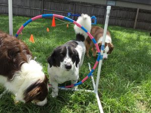 Dogs playing together at doggie daycare enrichment program Canine Cabana FL