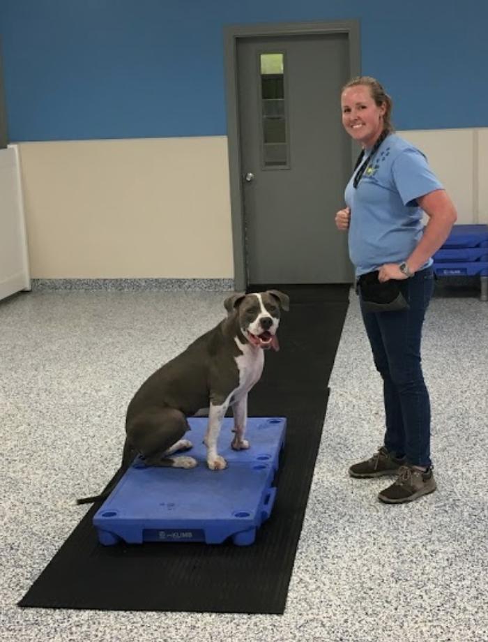 Dog Obedience Training at Canine Cabana
