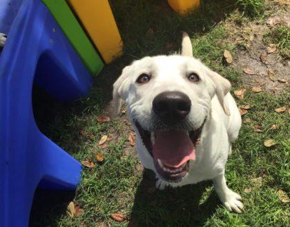 https://caninecabana.biz/wp-content/uploads/2021/02/dog-love-420x330-1.jpg