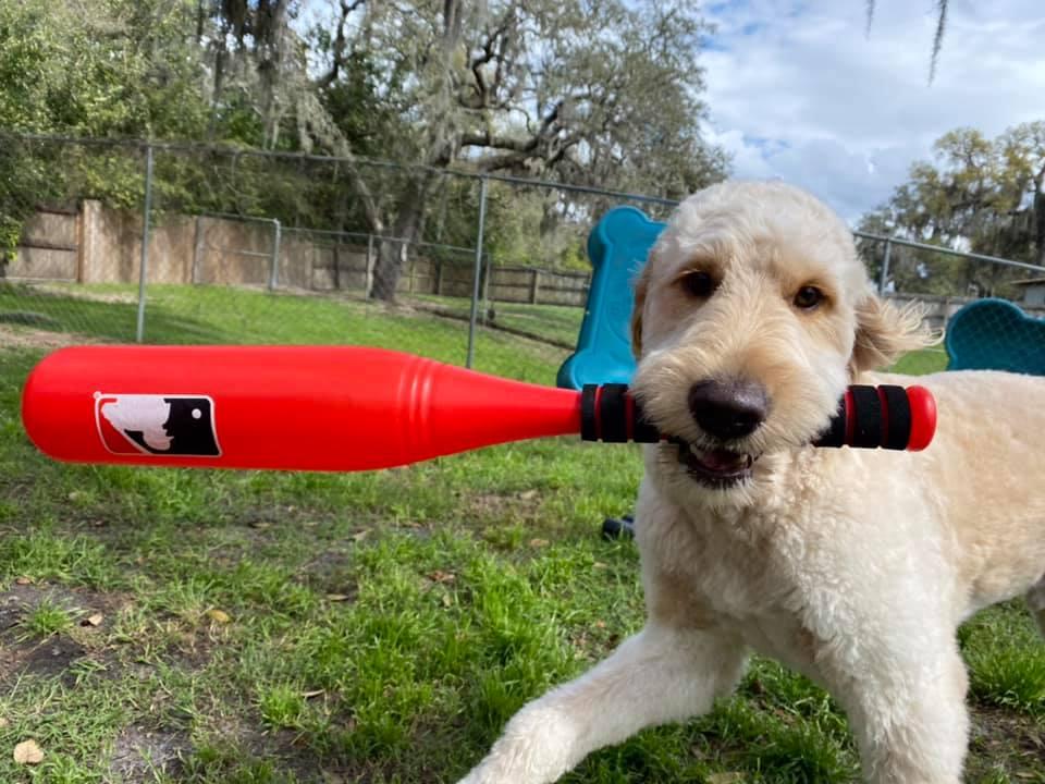 My Dog Has SOOOOOOO Much Energy!
