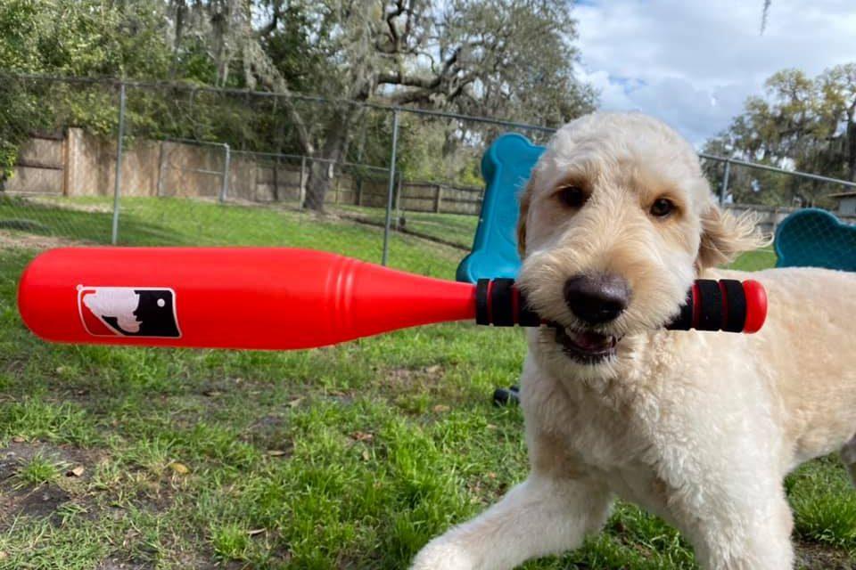 https://caninecabana.biz/wp-content/uploads/2021/03/dog-play-toy-960x640.jpg