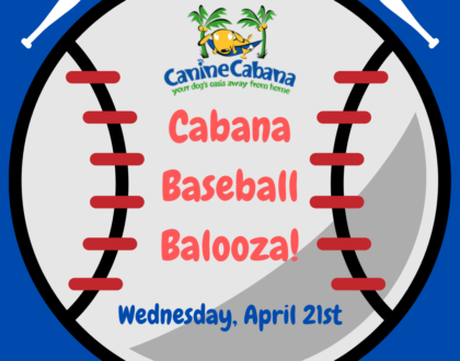 Get Ready For Cabana Baseball Balooza!
