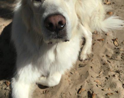 Dog Superstar: Beast S.