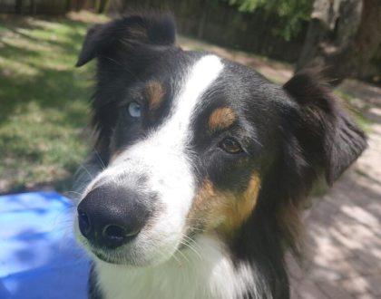 Dog of the Month: Elsker