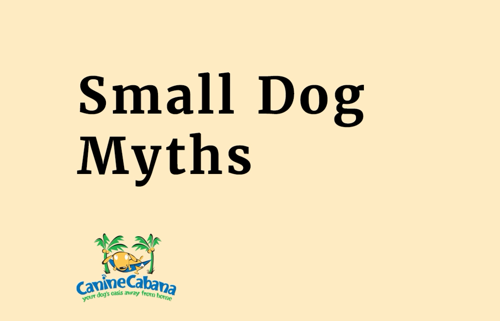 https://caninecabana.biz/wp-content/uploads/2021/07/small-dog-myth-cover-996x640.png