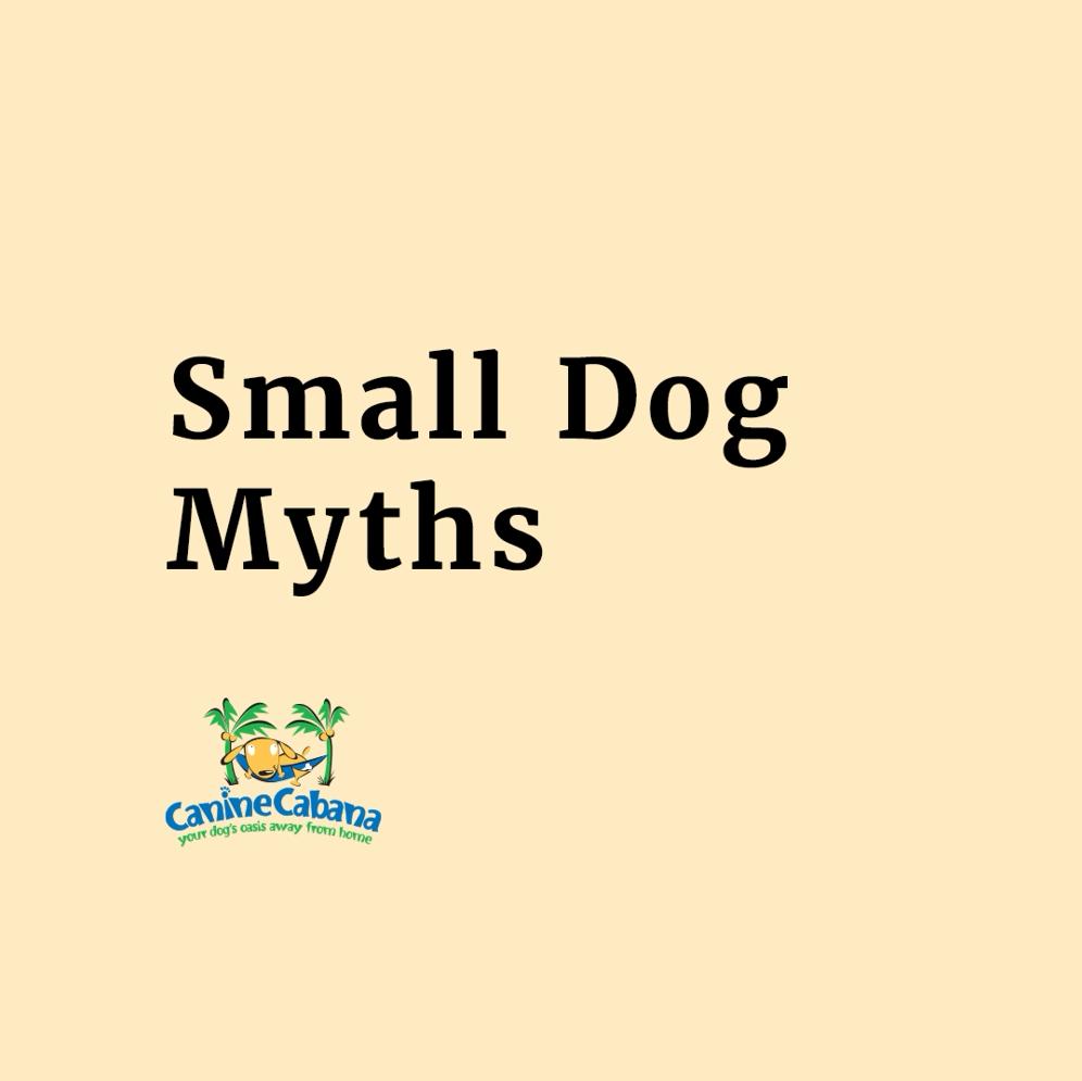 https://caninecabana.biz/wp-content/uploads/2021/07/small-dog-myth-cover.png
