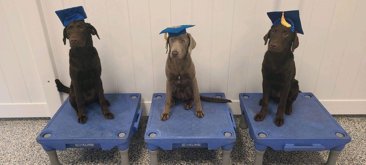 https://caninecabana.biz/wp-content/uploads/2021/08/Buddy-Duke-and-Diesel-1280x577.jpeg