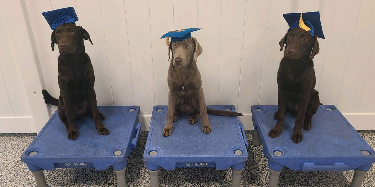 https://caninecabana.biz/wp-content/uploads/2021/08/Buddy-Duke-and-Diesel-1280x640.jpeg