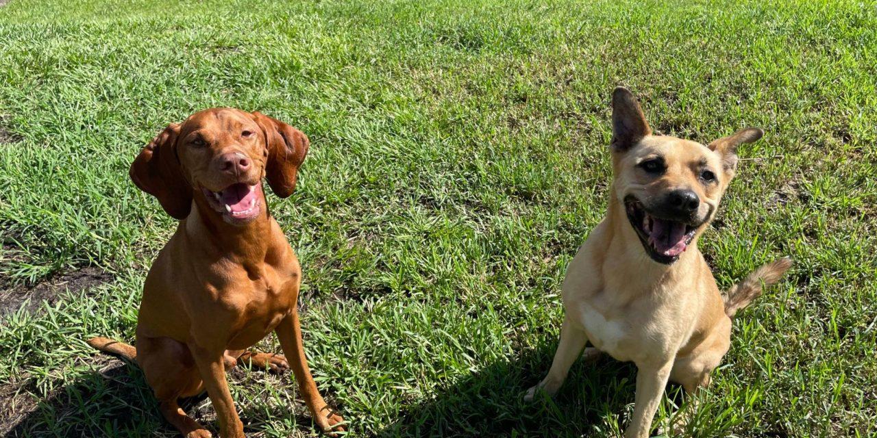 https://caninecabana.biz/wp-content/uploads/2021/09/happy-pups-july-1280x640.jpg